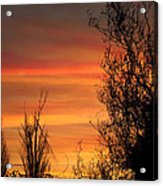 Sunset Branches Acrylic Print