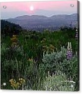 Sunset Flowers Acrylic Print
