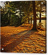 Sunset In Woods At Lake Shore Acrylic Print