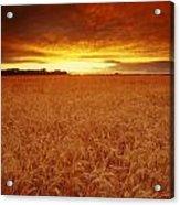 Sunset Over Wheat Field Acrylic Print