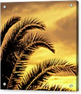 Sunset Palms Acrylic Print