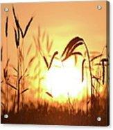 Sunset Rye IIi Acrylic Print