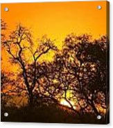 Sunset, Sabi Sand Reserve, Mpumalanga Acrylic Print