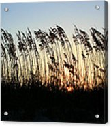 Sunset Sea Oats Acrylic Print