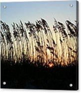 Sunset Sea Oats Acrylic Print