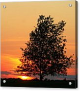 Square Photograph Of A Fiery Orange Sunset And Tree Silhouette Acrylic Print