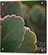 Sunset Succulents Acrylic Print