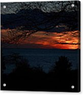 Sunset Tree Closeup Acrylic Print