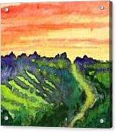 Sunset Vineyard Acrylic Print