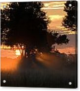 Sunset With Silhouetted Trees Acrylic Print