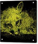 Sunshaded Acrylic Print