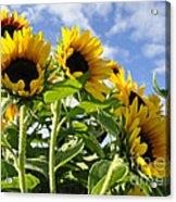 Sunshine Lolipops Acrylic Print
