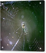 Sunshine On Swamp Spider Acrylic Print