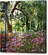 Sunshine Through Savannah Park Trees Acrylic Print