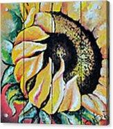 Sunspots Acrylic Print