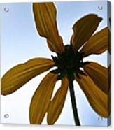 Sunstar Acrylic Print