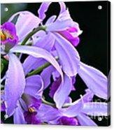 Super Orchid Acrylic Print