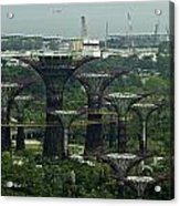 Supertrees At The Gardens By The Bay In Singapore Acrylic Print