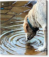 Sure Is Good On A Hot Day Acrylic Print