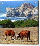 Surf And Turf Two Acrylic Print by Jeff Lowe