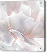 Surprise Rose Acrylic Print by Svetlana Sewell