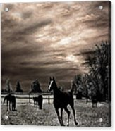 Surreal Horses Infrared Nature  Acrylic Print by Kathy Fornal