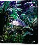 Surreal Tropical Forest Drawing Illustrated Scene Acrylic Print