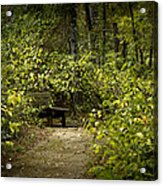 Surrounded By American Beauty Acrylic Print by Kim Henderson