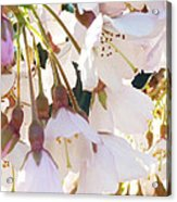 Surrounded By Spring Acrylic Print