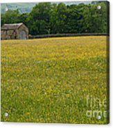 Swaledale Buttercup Meadow Acrylic Print