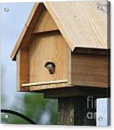 Swallow Box Home Acrylic Print