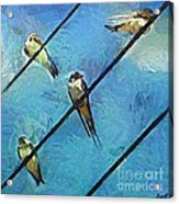 Swallows Goes To South Acrylic Print