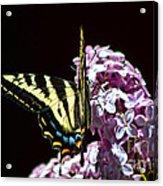 Swallowtail On Lilac 3 Acrylic Print
