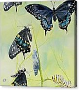 Swallowtail Story Acrylic Print