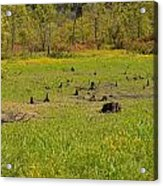 Swamp After Drout Acrylic Print