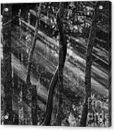 Swamp At Sunset Acrylic Print