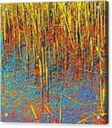 Swamp Colors Acrylic Print