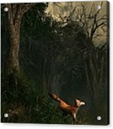 Swamp Fox Acrylic Print