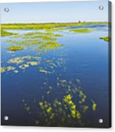 Swamp Lanscape II Acrylic Print