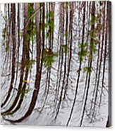 Swamp Reflection Acrylic Print