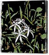 Swamplilies Acrylic Print