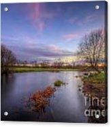 Swampy 3.0 Acrylic Print
