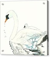 Swan And Her Baby Acrylic Print