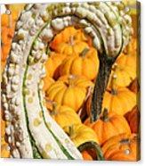 Swan Gourd Acrylic Print