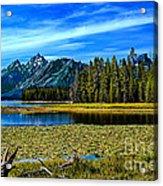 Swan Lake II Acrylic Print