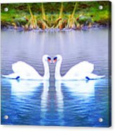 Swan Love Acrylic Print by Bill Cannon