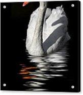 Swan Riflected In The Dark Acrylic Print