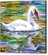 Swan Summer Acrylic Print