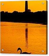 Swan Sunset At The Light Acrylic Print