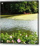 Swans On Pond And Hibiscus With Oil Painting Effect Acrylic Print
